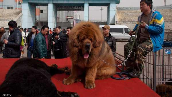 حديقة حيوانات ,   الصين ,   كلب ,   أسد