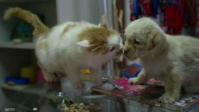 تعرف إلى أول مدينة صينية تحظر أكل الكلاب والقطط