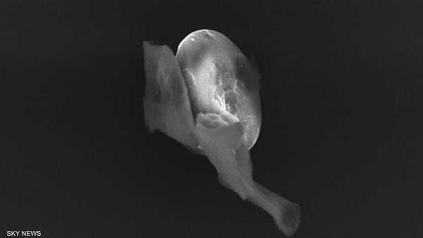 مخلوقات فضائية , كائتان غريبة دقيقة , كائنات دقيقة , غرباء , علماء فلك , علم الأحياء , جامعة شيفيلد , بريطانيا