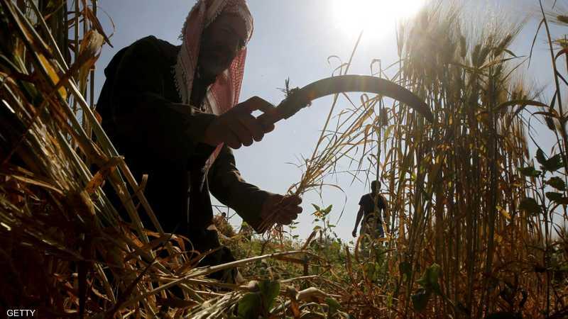 المنجل هو أهم الأدوات التي ما زالت مستخدمة في حصاد القمح.