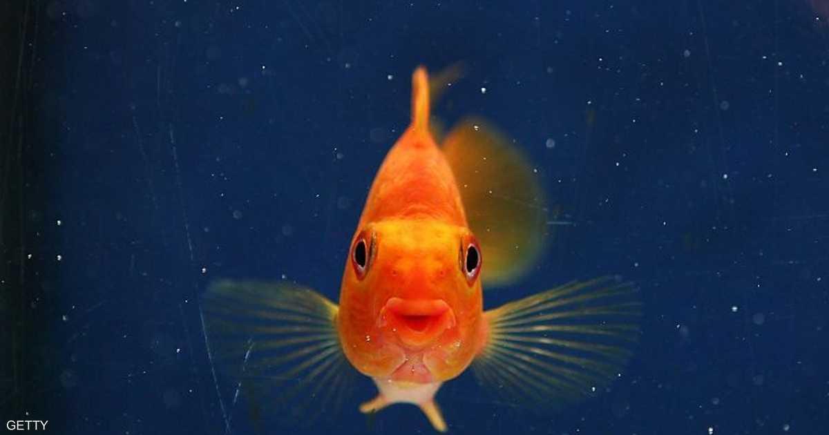 """عملية جراحية دقيقة لسمكة تعاني """"الإمساك"""""""