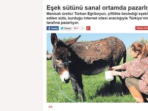 اهتمت الصحف التركية بالخبر ونشرت صورا أثناء قيام صاحبة المزرعة بحلب أحد الحمير - صحيفة ميليت التركية