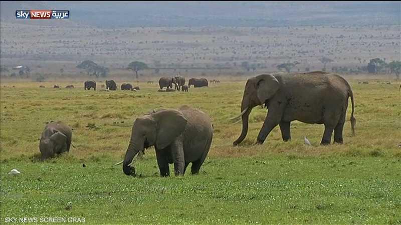 زيمبابوي.. نفوق 200 فيل في أقل من شهرين 1-889224.jpg