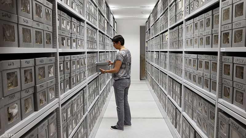 Le musée de l'Homme à Paris tient les crânes