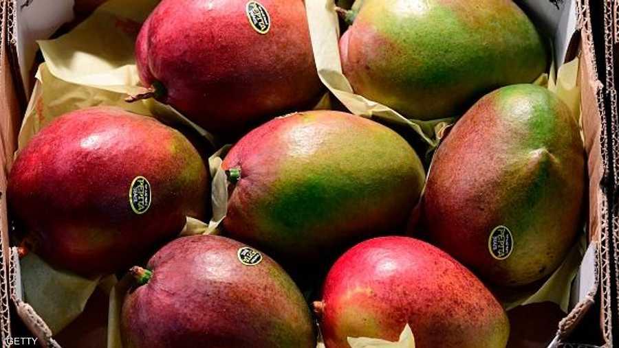 تتميز فاكهة المانجو بغناها بالألياف
