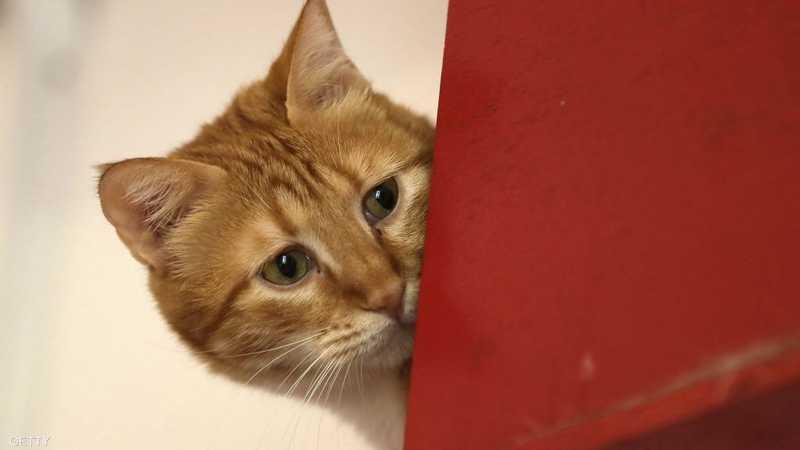 في لبنان ثمة ملجأ لحماية القطط من الأخطار والعناية بها