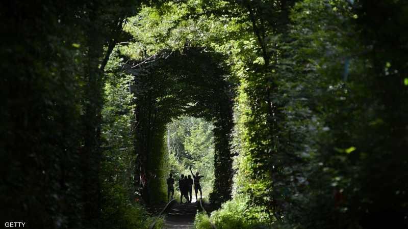 النفق عبارة عن ظاهرة طبيعة غربية شكلتها الأشجار والنباتات