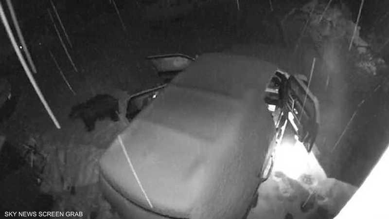 دب يتقحم سيارة ليلا