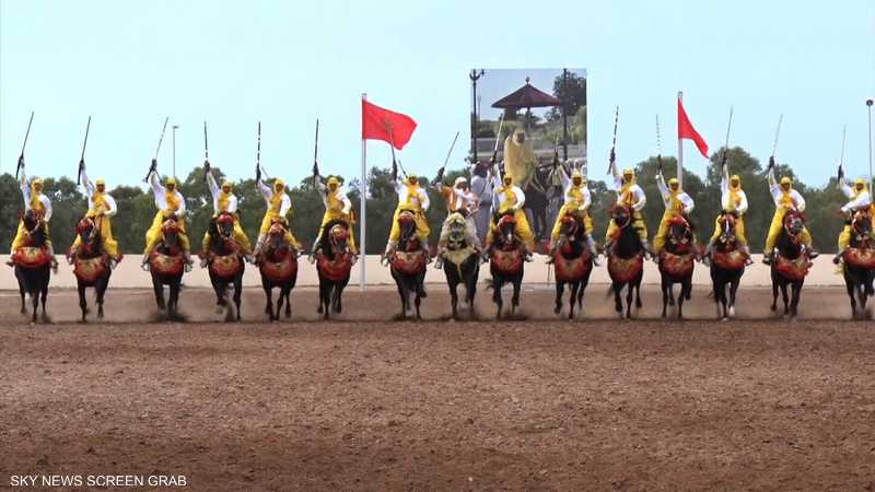 تربية الخيول.. مهنة قديمة يحافظ عليها أصحابها