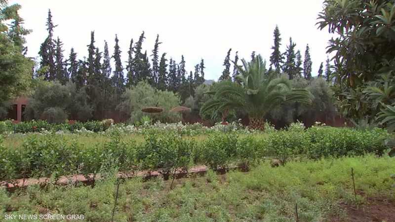 الأعشاب الطبية.. تجارة مزدهرة في المغرب
