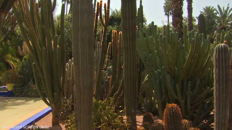 """حدائق ماجوريل تجسد حب""""إيف سان لوران"""" لمراكش"""