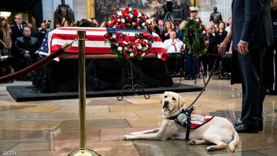 كلب بوش الأب ظل وفيا حتى بعد الوفاة