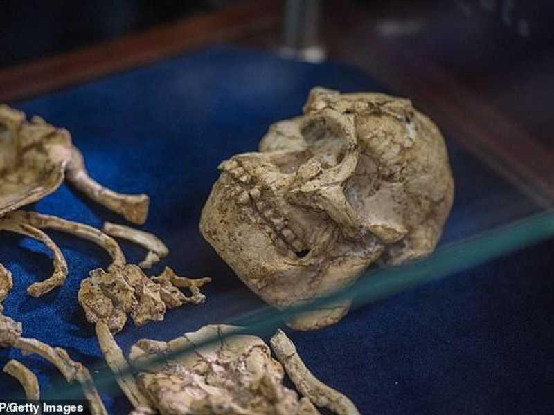 اكتشاف الهيكل العظمي لأول مرة تم في فترة التسعينيات