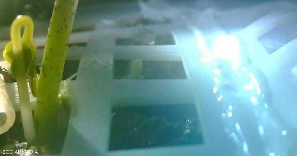 أول نبة صينية على القمر.. إنجاز لم يعمّر طويلا