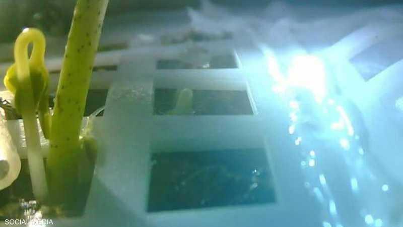 أول نبتة صينية على القمر.. إنجاز لم يعمّر طويلا
