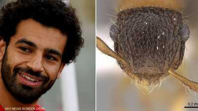 """عالم حشرات مصري يكرّم صلاح بطريقة """"غريبة"""""""