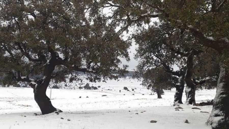 قالت الأرصاد الجوية إن الثلوج تساقطت على المناطق التي يزيد ارتفاعها عن ألف متر، على أن يصل إلى ارتفاعات أقل الأربعاء والخميس.