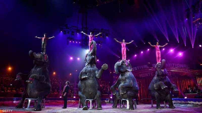 تمكن فنانون من إخضاع حركة الفيلة إلى درجة أنها أصبحت ساكنة
