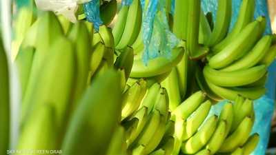 الموز الأخضر والأصفر.. ما الفرق؟