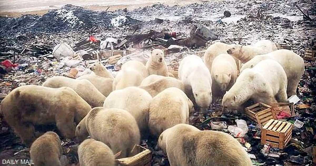 غزو الدب القطبي يرعب الدب الروسي