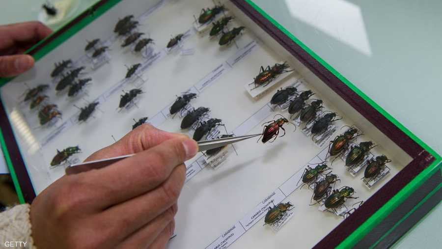 الحشرات جزء من السلسلة الغذائية وأختفاؤها يدمر السلسلة