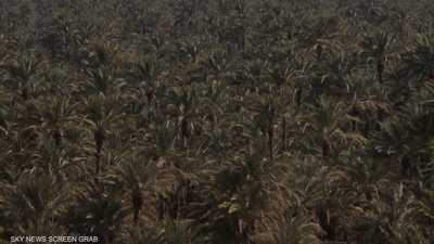 """المغرب.. """"زاكورة"""" واحة المليون نخلة"""