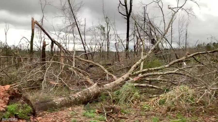 الأعاصير تعصف بالغابات في الولاية