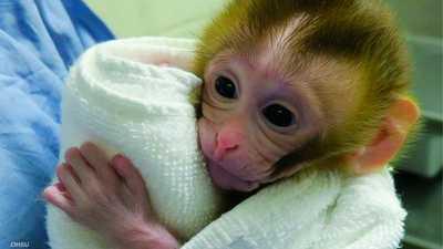 أول ولادة في العالم عبر نسيج خصية مجمّد