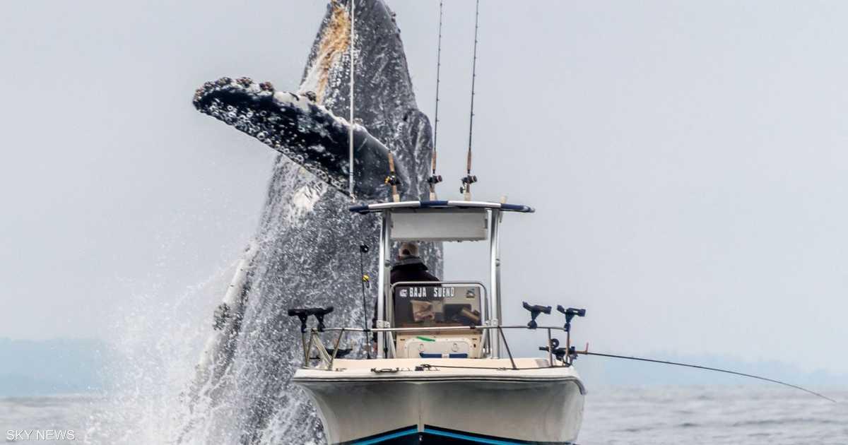 السفينة والحوت الهائل في لقطة