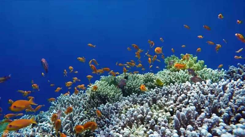 تأثير التغير المناخي على الشعب المرجانية في الخليج العربي