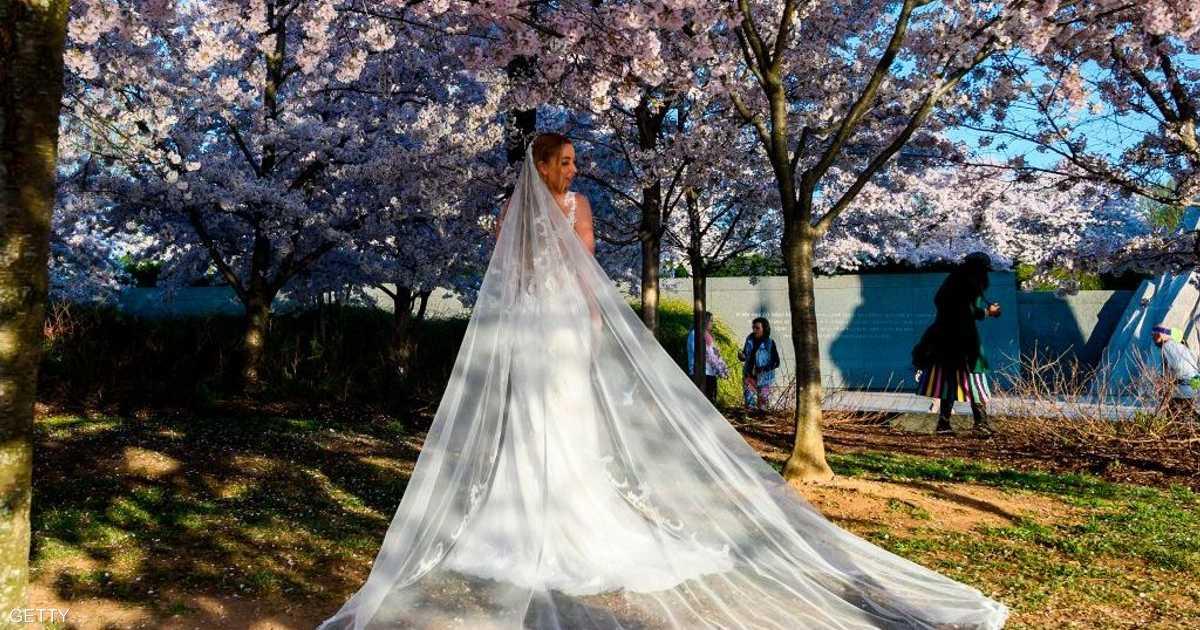 أمستردام تعلن عن  زواج السياحة .. والعرس الأول في خلال أيام   أخبار سكاي نيوز عربية