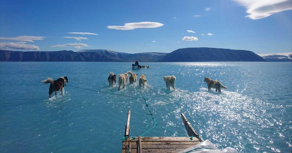 كلاب تمشي على الماء.. صورة نادرة تنذر بمستقبل