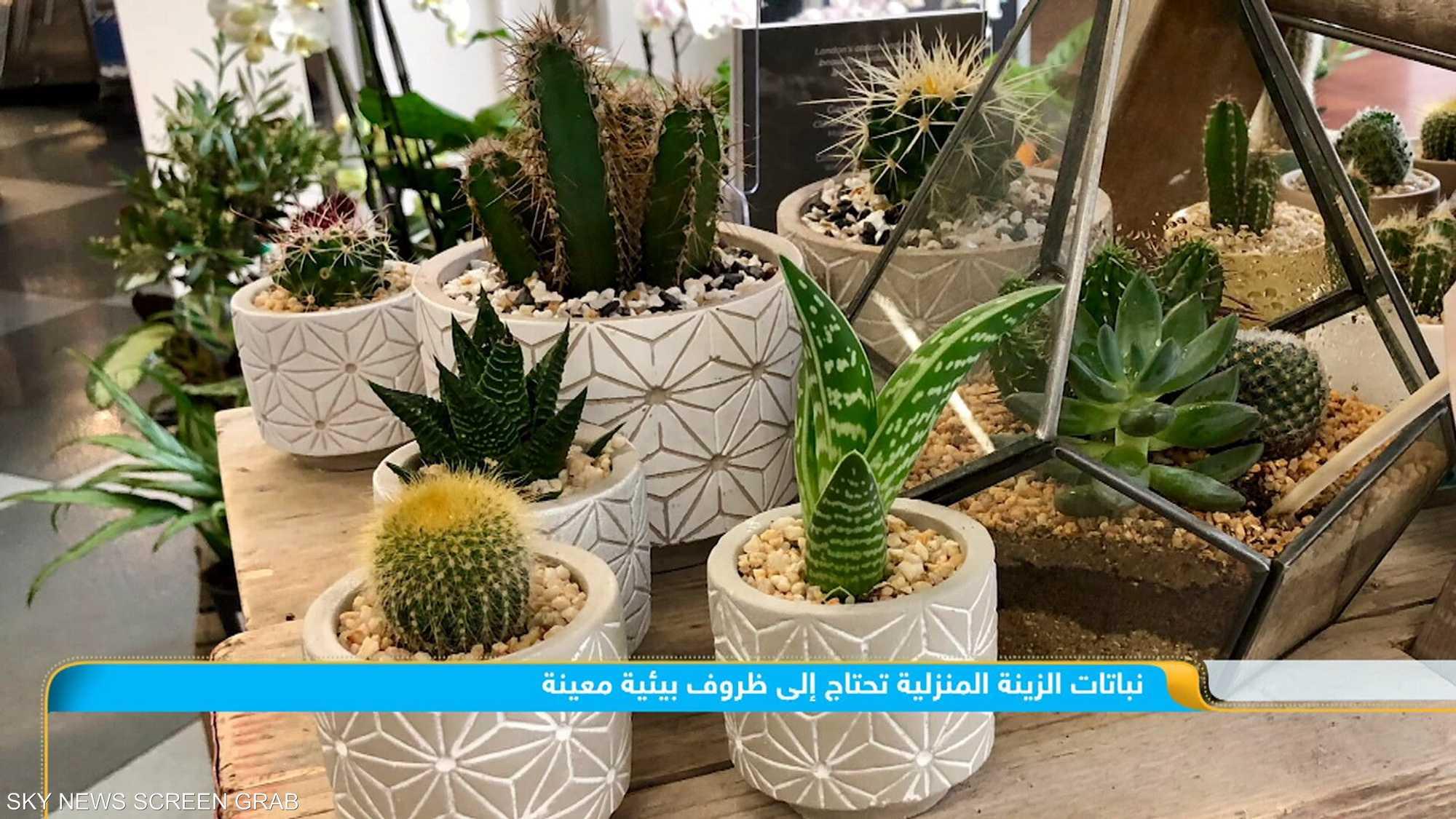 النباتات المنزلية.. فوائد وزينة لا غنى عنها