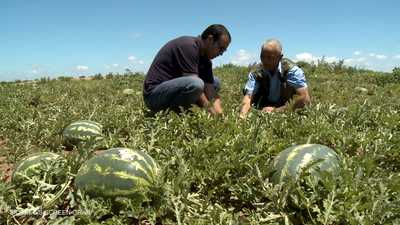 المغرب.. دعوى لترشيد المخزون المائي في المزارع