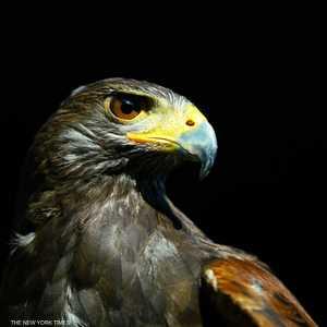 """مشهد مرعب .. """"طيور تنزف من عيونها ومناقيرها"""" وتتساقط من السماء"""