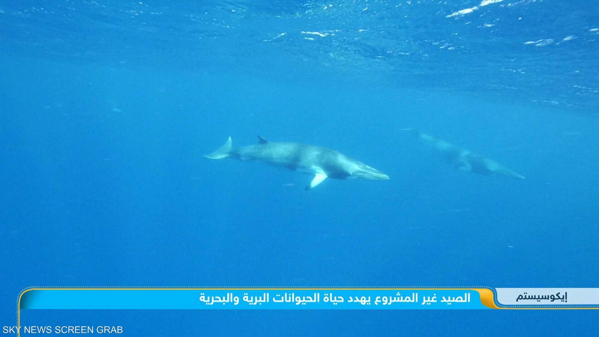 الصيد غير المشروع يهدد حياة الحيوانات البرية والبحرية
