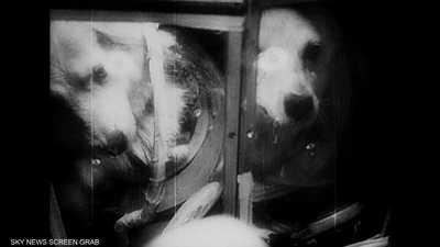 حيوانات مهدت الطريق للإنسان لاستكشاف الفضاء