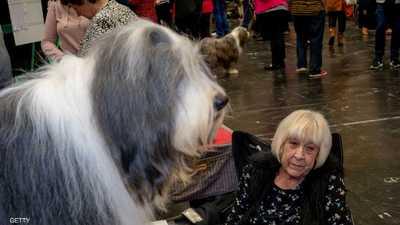 الحيوانات والمسنين.. دراسة تكشف العلاقة الإيجابية