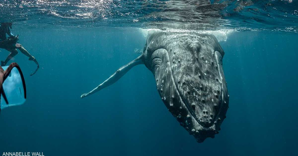 كيف تتواصل الحيتان؟.. باحثة تكشف أسرارا فريدة