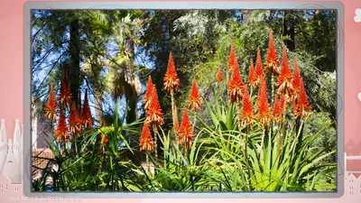 جمال الطبيعة المغربية في حديقة ماجوريل