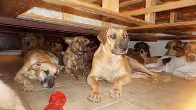 مهمة صعبة ونبيلة.. كيف اجتمع 97 كلبا في بيت واحد؟