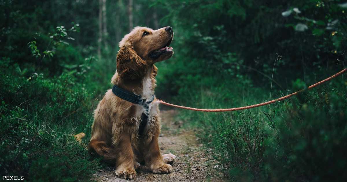 هل تعشق تربية الكلاب؟.. تحذير من