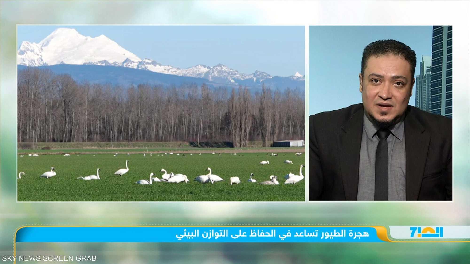 هجرة الطيور تساعد في الحفاظ على التوازن البيئي