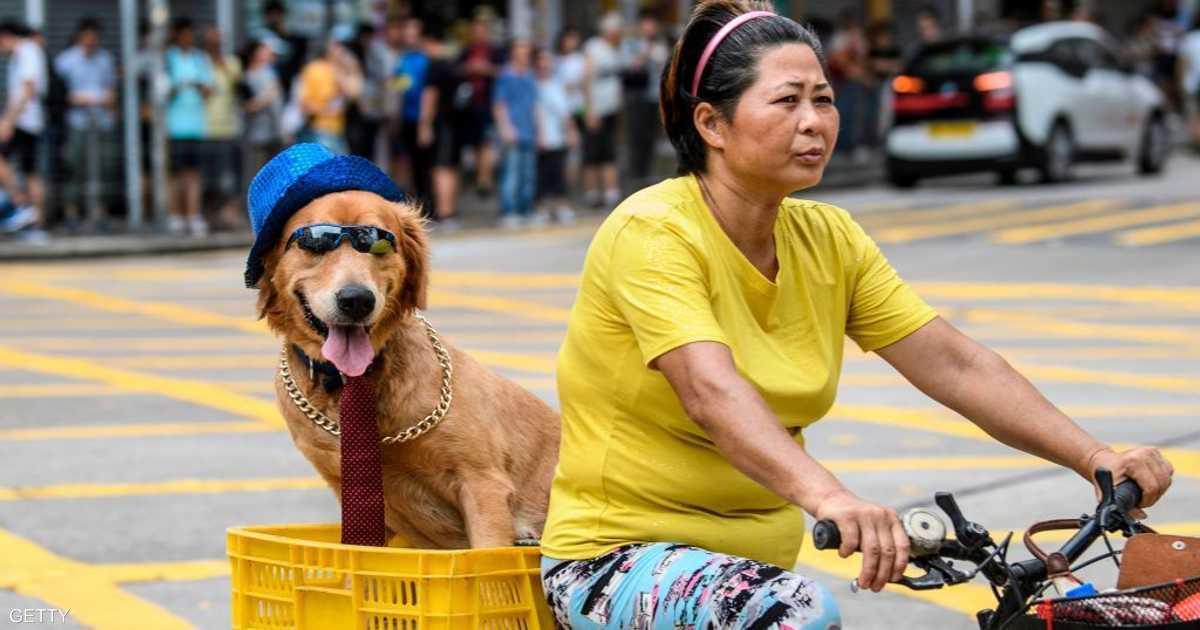 دراسة: امتلاك كلب مفيد يطيل العمر