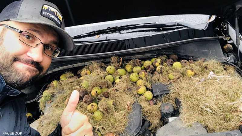كريس وحبات الجوز تحت غطاء محرك السيارة