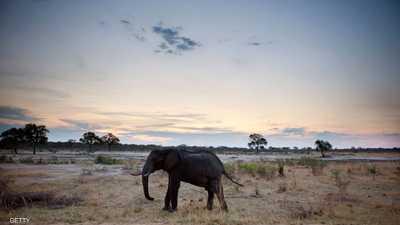 """زيمبابوي.. نفوق عشرات الأفيال و""""كارثة"""" تهدد الملايين"""