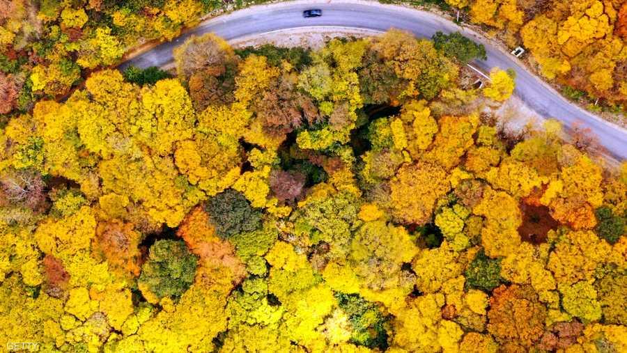 صورة جوية تُظهر طريقا بالقرب من قرية مارتكوبي خارج تبليسي، عاصمة جورجيا، وقد زينتها ألوان الخريف.