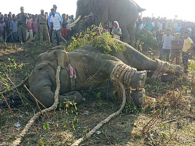 زيمبابوي.. نفوق 200 فيل في أقل من شهرين 1-1297474.jpg