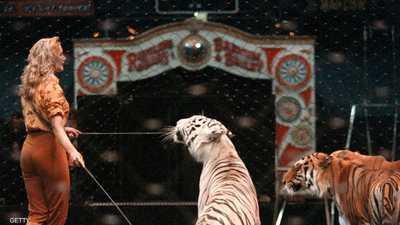 باريس تمنع عروض الحيوانات البرية في السيرك
