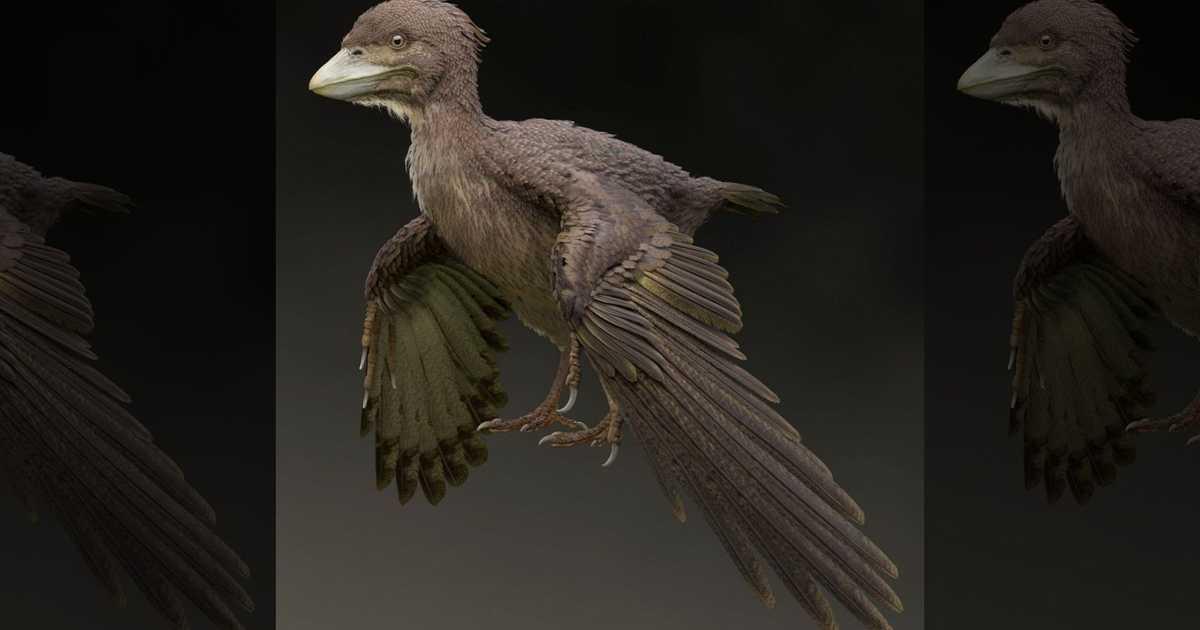 """عاش قبل 120 مليون عام.. العثور على أحفورة الطائر """"غير الماهر"""""""